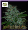 Cream of the Crop Auto Narcotherapy Fem 10